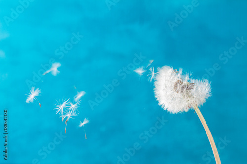 Tuinposter Paardebloem White dandelion on blue