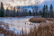 Frozen Pond With Cattails In Winter