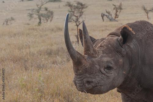In de dag Neushoorn Rhinoceros in Nature