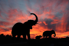 Elephant Family Silhouetted Against A Spectacular Snset On The Serengeti Plains Of Africa