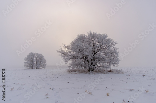 Poster Donkergrijs mystical winter landscape with large trees in the field