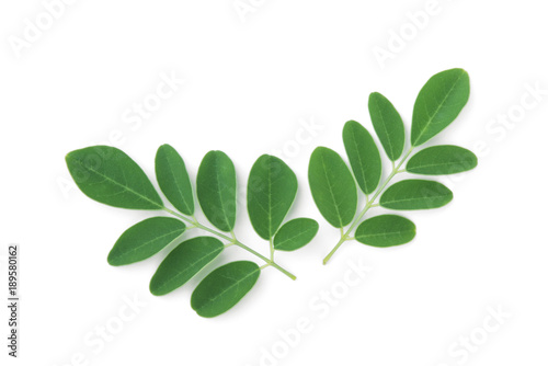 Canvas Prints Condiments moringa leaves tropical herb isolated on white background