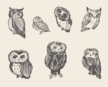 Set Vector Drawn Owls Vintage Style
