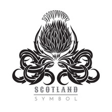 Silhouette Of Thistle With Leaf Pattern. Symbol Of Scotland Design Element Black On White