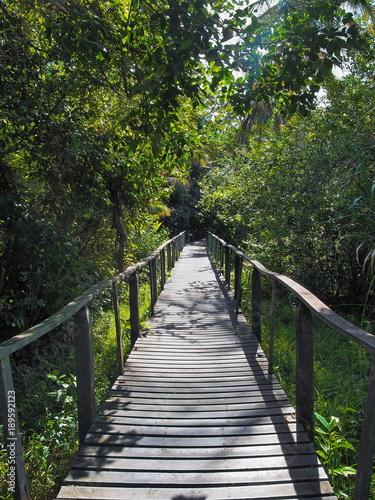 Fototapeta kładka  kladka-w-dzungli-parku-narodowego-cahuita-karaiby-kostaryka