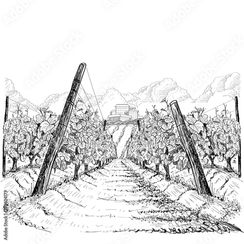 Foto  Vineyard landscape with clouds and building on the hill