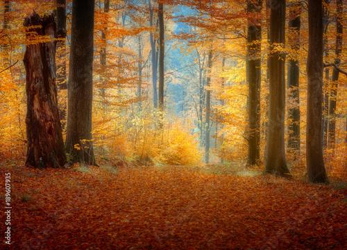 Fotografie, Obraz  In the forest