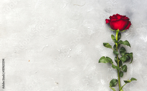 Beautiful red rose flower o...