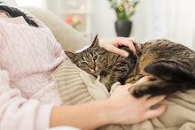Close Up Of Owner With Tabby C...
