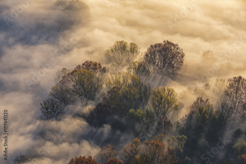Papiers peints Beige sole e nebbia