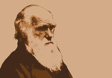 Darwin -  Portrait - évolutio...