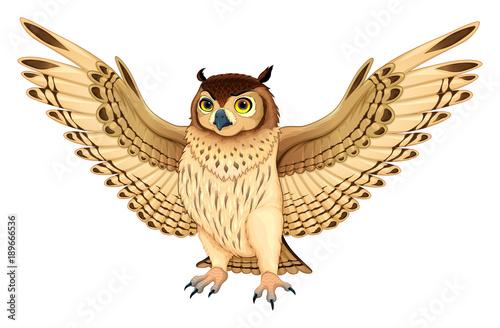 Staande foto Kinderkamer Funny owl with opened wings