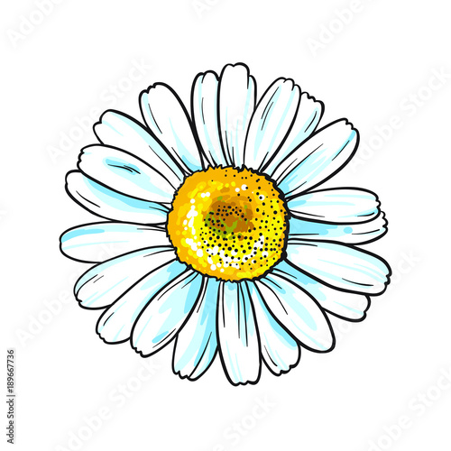 Vector white flower with yellow middle isolated on white background vector white flower with yellow middle isolated on white background beautiful chamomile mightylinksfo