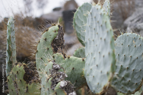 Papiers peints Cactus cacuts sivestre