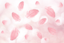 Abstract Coral Pink Single Feather On Soft Pink Bokeh Pattern Texture Background