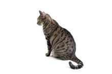 Tabby Cat Profile