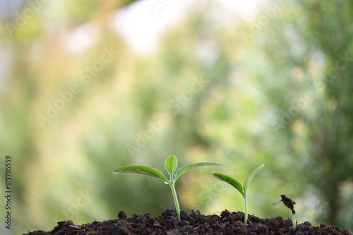 Garden Poster Plant Growing green plant