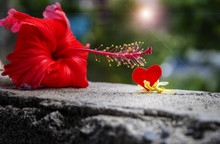 Gumamela Flower And A Cut-out Heart Shape With Blurry Background For Valentines Holiday