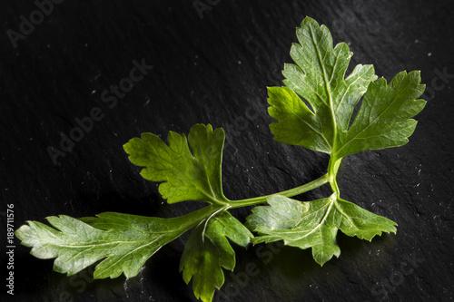 One parsley fresh leaf on slate