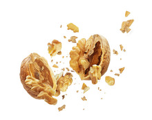 Walnut Is Torn To Pieces On Wh...