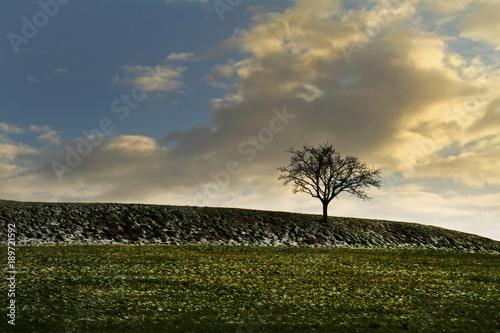 Foto op Aluminium Blauw Feldlandschaft im Januar