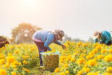 Thai Worker Or Gardener Keepin...