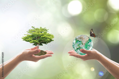 Obraz Reforestation, sustainable world forest, and tree care day concept: Elements of this image furnished by NASA. - fototapety do salonu