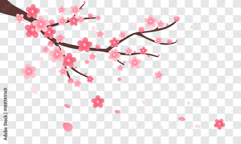 Fototapety, obrazy: Sakura branch with falling petals Vector illustration. Pink Cherry blossom on transparent background.