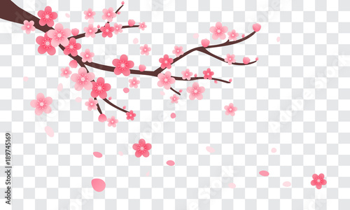 Photo  Sakura branch with falling petals Vector illustration