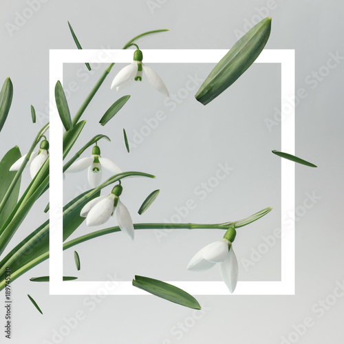Fotobehang Bloemen Creative layout made with snowdrop flowers on bright background with frame. Spring minimal concept.