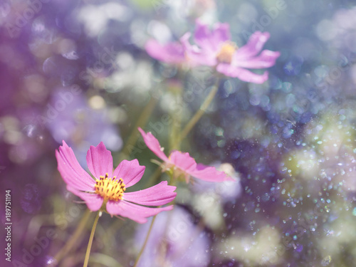 Foto op Canvas Bloemen floral background with bokeh