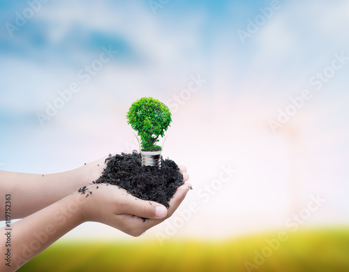 Photo Stands Roe hand holding tree in broken bulb on blurred background, safe world conception