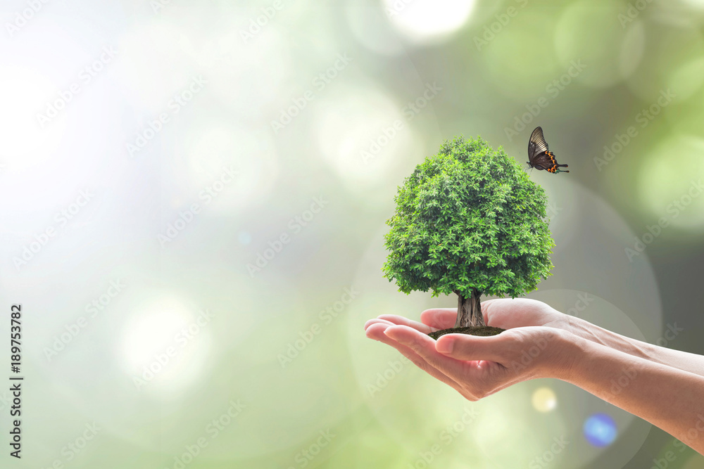 Fototapeta Environment and ecosystem preservation concept with tree planting on volunteer's hand