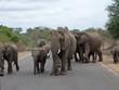 Elefantenherde 3