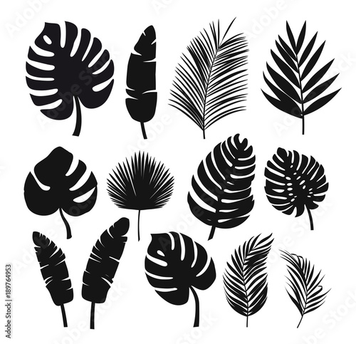 Obraz Set of black silhouettes of tropical leaves palms, trees. - fototapety do salonu