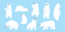 Bear Polar Bear Teddy Vector I...