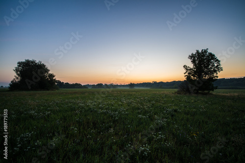 Wall Murals Beautiful morning Summer meadow at Morava river in sunrise, Slovakia forest, Europe