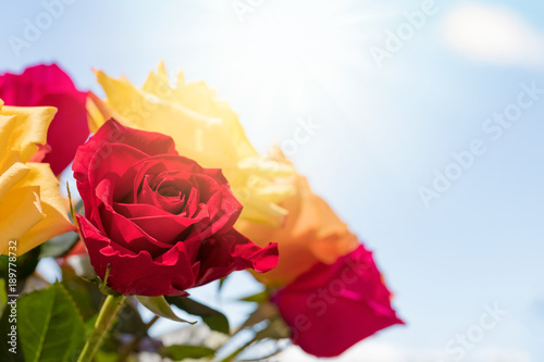 Bouquet of roses over sunny sky