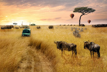 Dreamy African Wildlife Safari...
