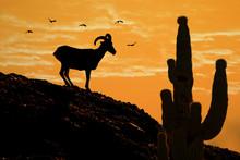 Desert Bighorn Sheep Silhouette