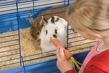 Mädchen Füttert Kaninchen Mi...