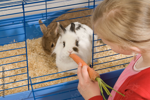 Mädchen füttert Kaninchen mit einer Karotte