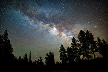 Milky Way Over Silhouetted Trees