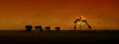 canvas print picture African Animals Sunset Silhouette Banner