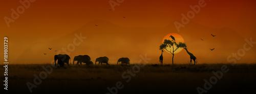 Transparent sylwetka zachód afrykańskich zwierząt