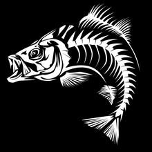 Bass Skeleton Isolated On Black