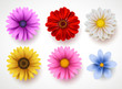 Spring flowers colorful vector set isolated in white background. Collection of daisy and sunflowers with various colors for spring season as graphic elements and decorations. Vector illustration.