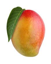 Mango, Isolated On White Backg...