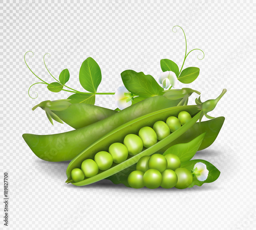 Vector green peas. Photo-realistic vector pods of green peas with leaves and flowers on transparent background. 3d green peas illustration. © leezarius