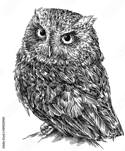 Tuinposter Uilen cartoon black and white engrave isolated owl illustration